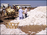 Growing cotton is no longer a profitable option