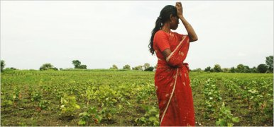 Kausalya Shende standing in the field where her brother's cotton crop failed three times this year — twice for lack of rain and once from flooding.