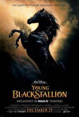 young_black_stallion1